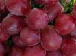 Vörös szőlő pakolás